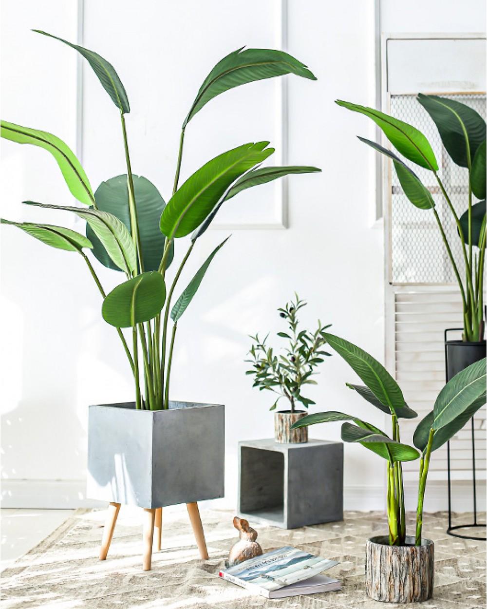 BOTANICA Birds of Paradise | Palm Plant